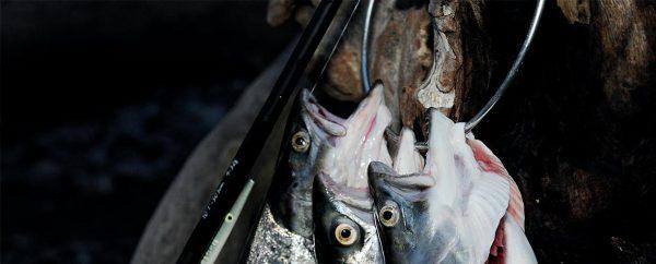 Fiskegalger sådan