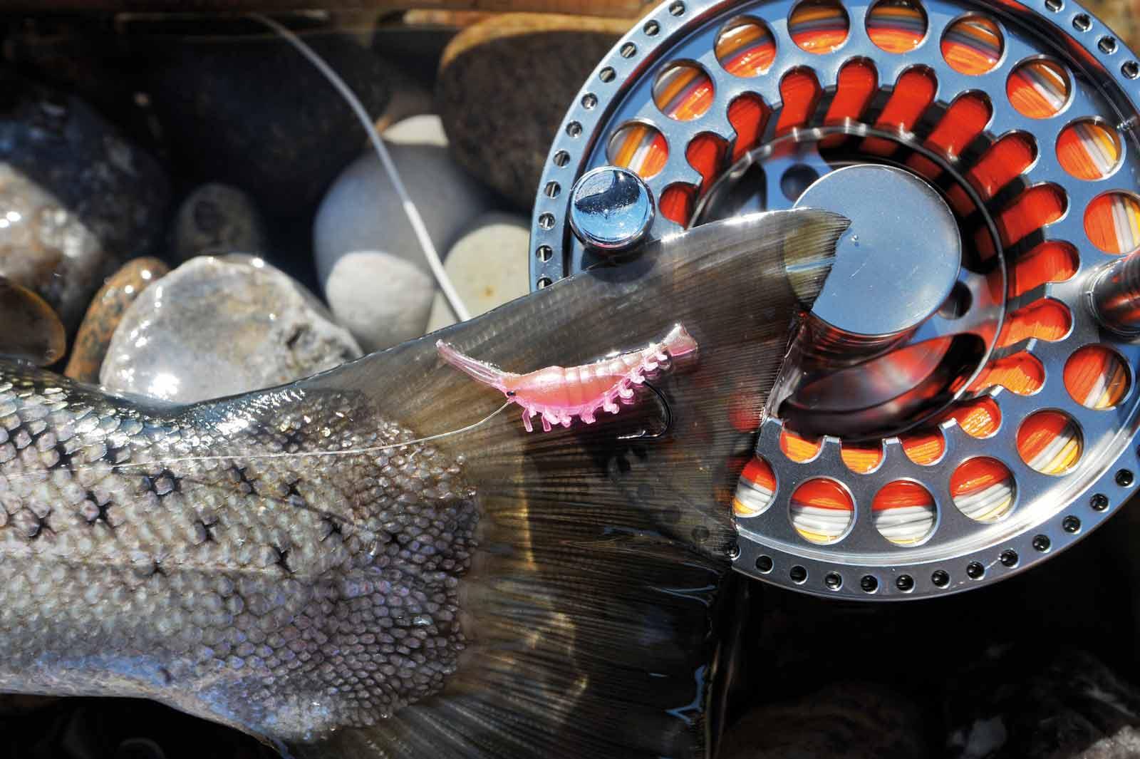 Fluefiskeri med gummi