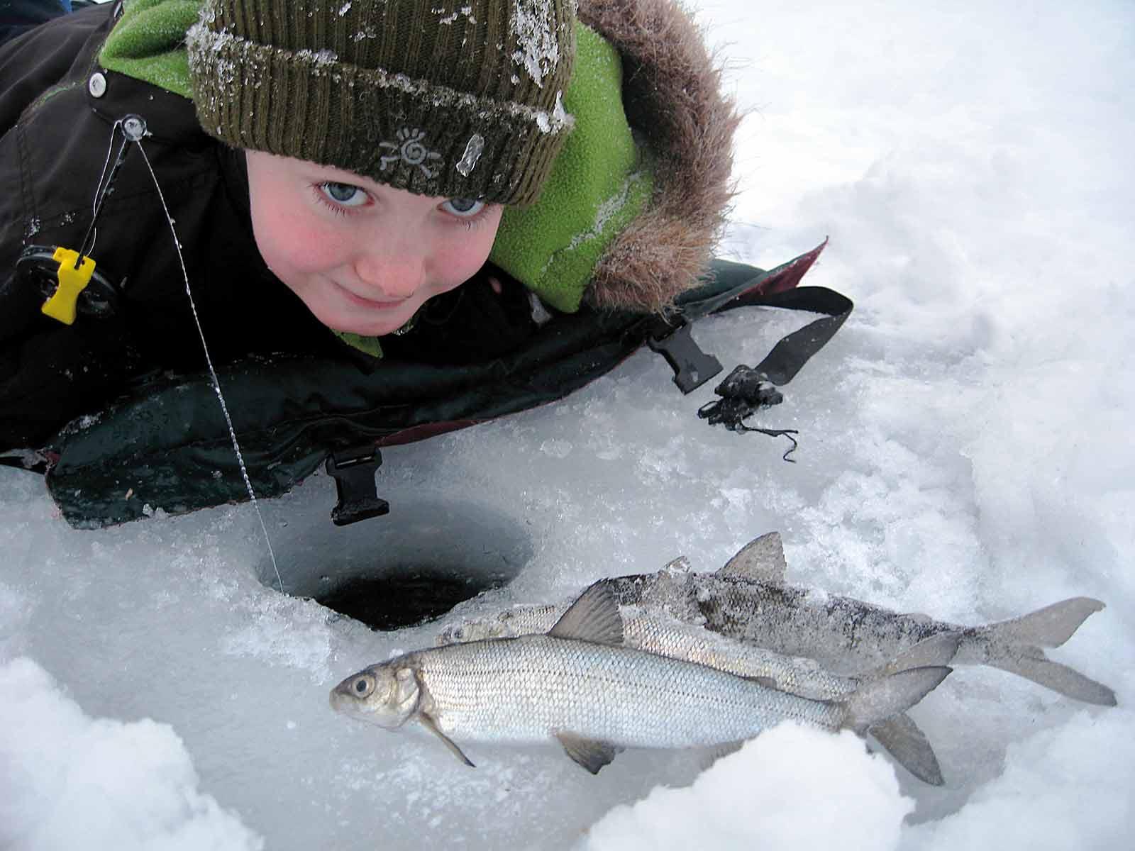 Emil fanger en stalling fra isen