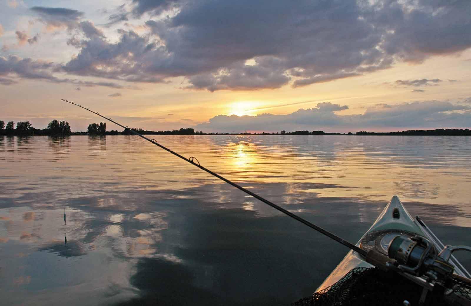 Havørredfiskeriet i Odense Fjord kan blive meget bedre
