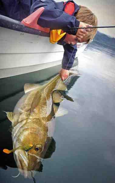 Jighovedets vægt kan med fordel tilpasses efter forholdene. Fisker man over meget dybt vand eller hård strøm, skal man enten gå ned i linetykkelse eller op i vægt på agnen.