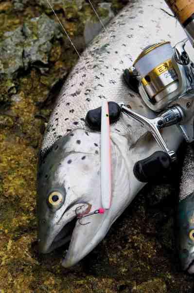 Fisk & Fri's datamateriale for havørredkontakter viser tydeligt, at man ikke mister færre fisk med gennemløbere som denne – tværtimod. Vil du lande lidt flere fisk, bør du skifte trekrogen ud med en stor enkeltkrog over str. 1-1/0, men på trods af dette vil du dog stadig miste rigtig mange fisk.