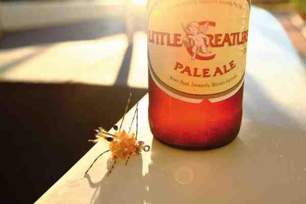 Er der nogen bedre måde at fejre sin første permit og en fantastisk fiskedag i paradis sammen med gode venner – end med en lokal kold øl? Krabbefluen, der gjorde udslaget, var den sidste flue, der blev bundet inden afgang fra kolde Danmark.