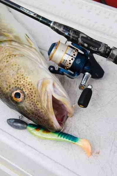 Når man skal finde fiskene er et godt ekkolod alfa og omega – og vil man også genfinde dem, er GPS'en mindst lige så essentiel. Denne torsk faldt for en Savage Gear Saltwater Sandeel.