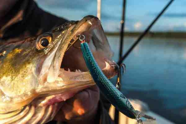 Woblerfiskeri kan være en effektiv måde at afsøge store arealer for sandart.