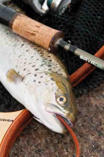 Det er de færreste havørreder der kan modstå en langsomt fisket Gulp som svæver lige over bunden.