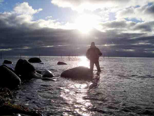 En stille dag på revet i selskab med ringende havørreder. Husk at fisk det lave vand af inden du går hele vejen ud.