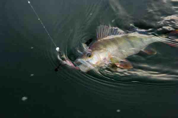 Fiskeri med små gummidyr er let at håndtere selv for mindre børn – og når krogene vender opad er der også mindre risiko for at de små får bundbid.