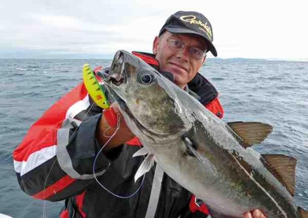 Hvis jiggen når helskindet igennem de store sejstimer, går der ikke længe, før den bliver taget af en af de mange torsk, som holder til ved bunden.