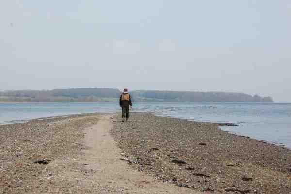 Det lange muslingerev ved Sandskær holder i perioder mange fisk, som kommer helt op på det lave vand.