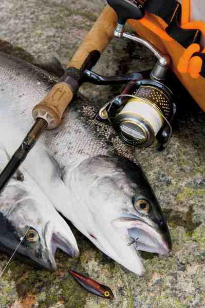 Release-tafsen er perfekt til letspin på kysten, hvor der fiskes med små kystwoblere – som fx denne Mini Goby.