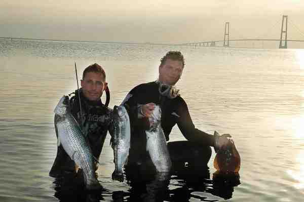 En god blandet fangst som resultatet af en lækker sommeraften med harpunerne på Vestsjælland.