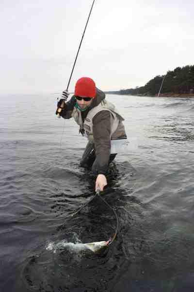 Bornholm byder på et fantastisk kystørredfiskeri i de kolde måneder, hvor det er billigt at leje sommerhuse. April kan lige som de fleste andre steder være virkelig god.