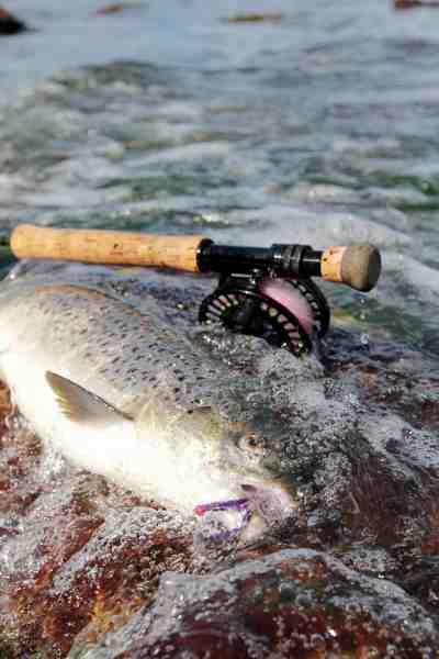 En fuldfed efterårsfisk kunne ikke modstå en hurtigt fisket Egg Sucking Leach – en fantastisk flue til træge fisk.