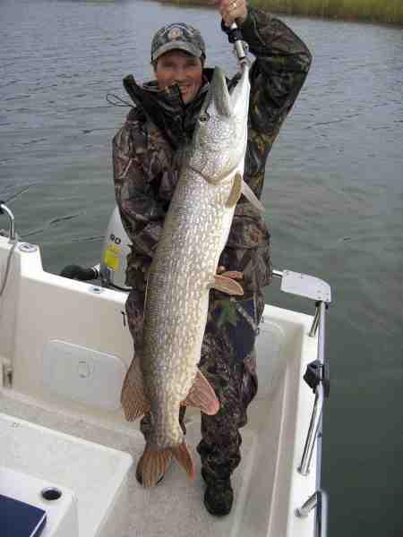 En af mange kapitale gedder til Ronni Andén. Denne fine fisk faldt for en Shallow Runner i Trosa Skærgård.