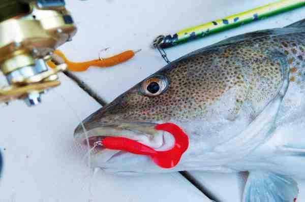 Med en ophænger øger du chancen for hug gevaldigt. Denne torsk lod sig friste af en curly-tail softbait.