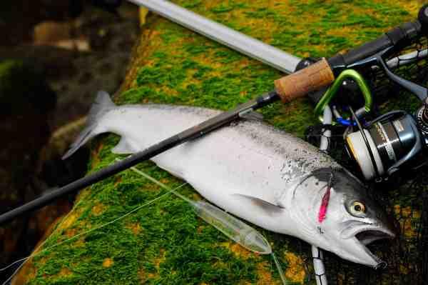 Når der fiskes med 3-4 meter lange forfang, kan et teleskopisk net som dette lette landingen en del. Her er det Devilfish Net fra Kinetic, der er coated med gummi. Det teleskopiske håndtag, som kan skydes ud med kun én hånd (+ en fod), er uden tvivl markedets bedste bud på det ultimative net til kystbombardafiskeri.