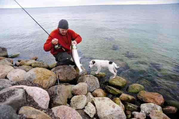 Allan elsker korte, lette stænger og bruger især en lille 7 fods XLNT stang fra Savage Gear, som kaster op til 30 gram. Den har masser af muskler, når der skal lægges pres på fisken og kaster perfekt med 12-20 gram.