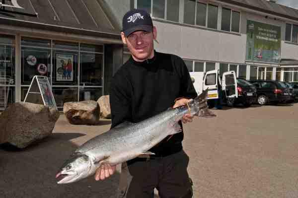 Indvejning ved Korsholm. Mange af de heldige lystfiskere ved Skjern Å vælger at slå et sving forbi Korsholm og få vejet deres fangst på premieredagen.