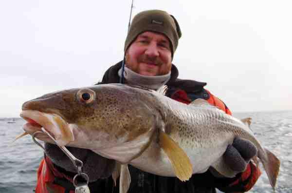 Rammer man den rette dag eller periode kan der være godt med torsk, der som denne hugger helt reelt.