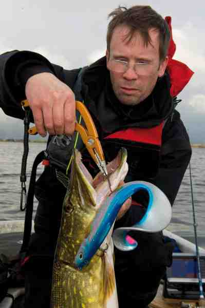 Til en afkrogningssituation som denne er SG Big Lure Plier perfekt. Her er forfatteren ved at afkroge en fin fisk taget på en Westin Monsterteez.
