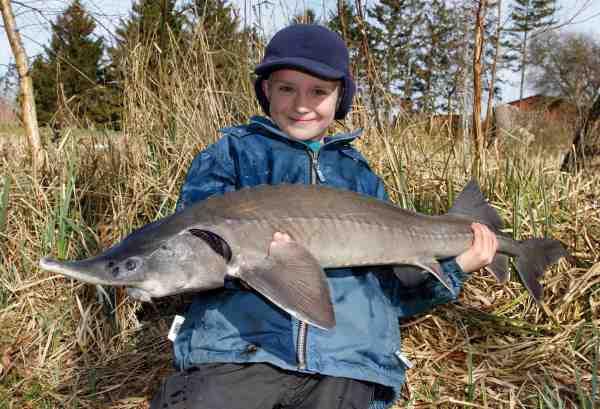 Fiskeriet er så let, at man sagtens kan dyrke det med børnene. Her ses Mikkel Carl med en sibirisk stør på knap 7 kg.