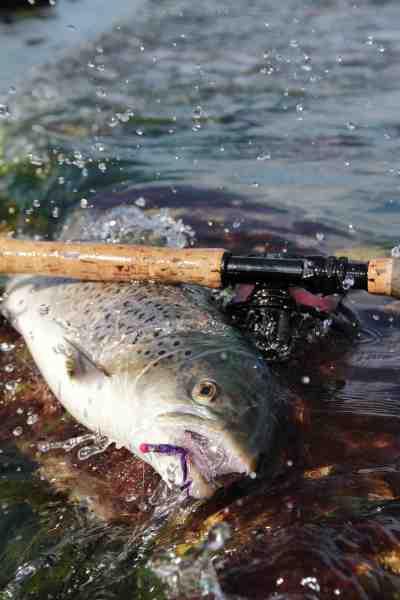 Fluefiskeriet mellem Haderslev og Aabenraa kan mange gange være det helt rigtige, som denne fine overspringer vidner om.