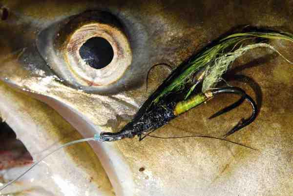 Endnu em ørred har taget Terkels flue – et giftigt mønster til smååernes havørreder.