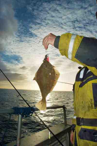 Hvis man vil have mange spætter i båden, er det vigtigt at give fisken en smule line i samme splitsekund, man mærker hugget.