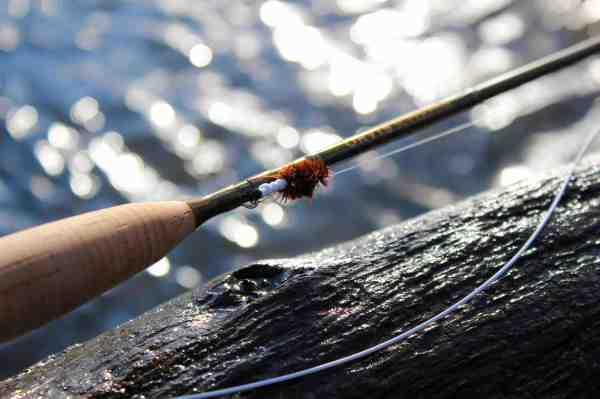 Den hvide forkrop der stikker ud af larvehuset er et kraftigt signal til fisken.