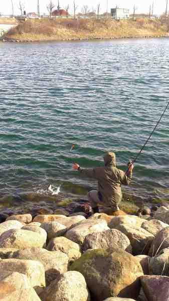 Zoran bruger normalt et stort karpenet, så han skånsomt kan lande og genudsætte de store, men mindre fisk som denne bliver afkroget i vandkanten.