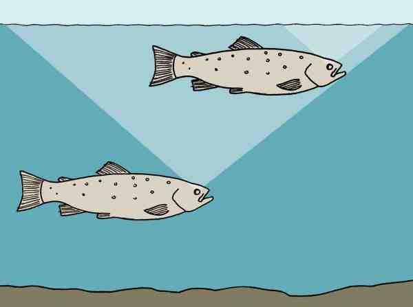 En fisk, der står dybere, bør man nærme sig mere varsomt end en fisk, der står højt, fordi førstnævnt har et større »synsvindue«.