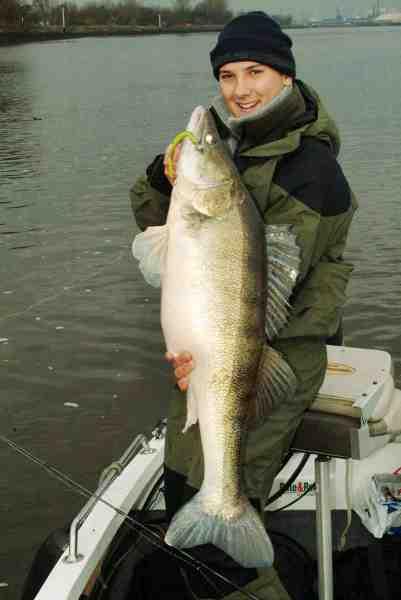 Fredrik Harbot har fanget skræmmende mange store sandart – her er han med en pragtfisk på 12 kilo.
