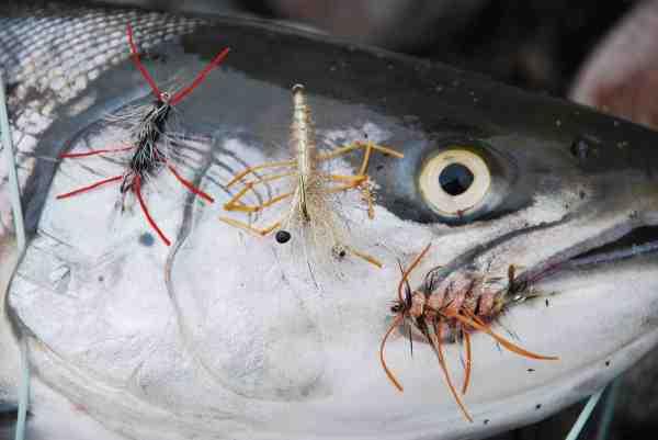 Krible-Krable er en superfanger, når frosten bider. Fra venstre mod højre: Krible-Krable variant, Honey Shrimp, som er et af forbillederne – samt en anden Krible-Krable variant med laksefarvet krop.