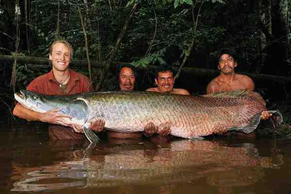 Arapaimaen var naturligvis en af de 24 ferskvandsarter, som Jakub er på jagt efter. Den på billedet var 307 centimeter og vejede 154 kilo, og gav ham en IGFA All Tackle verdensrekord. Og krydset på listen er dermed sat.