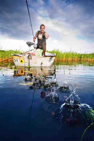 På Sorø Søerne er det på de fleste pladser en fordel med båd, så man kan sejle taklerne ud og fodre med største præcision.