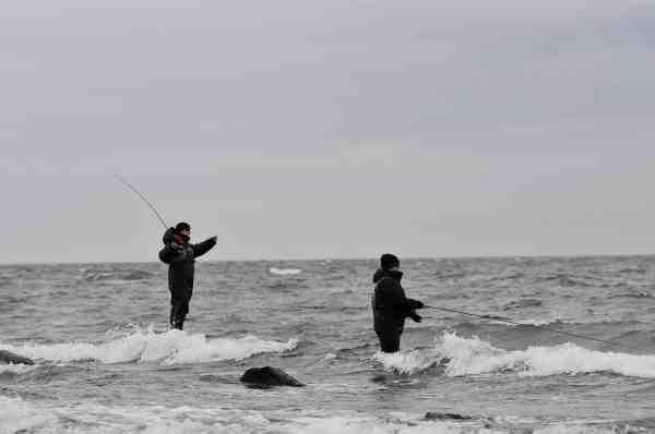 Er der gang i bølgerne og kraftig pålandsvind er spin nok det oplagte valg – men den insisterende kan da også fiske med flue.