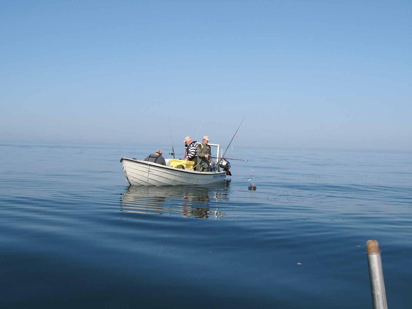 Småbådsfiskeri - udviklingen der i dag karakteriserer fiskeriet i Limfjorden.