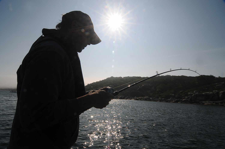 GULP efter torsk