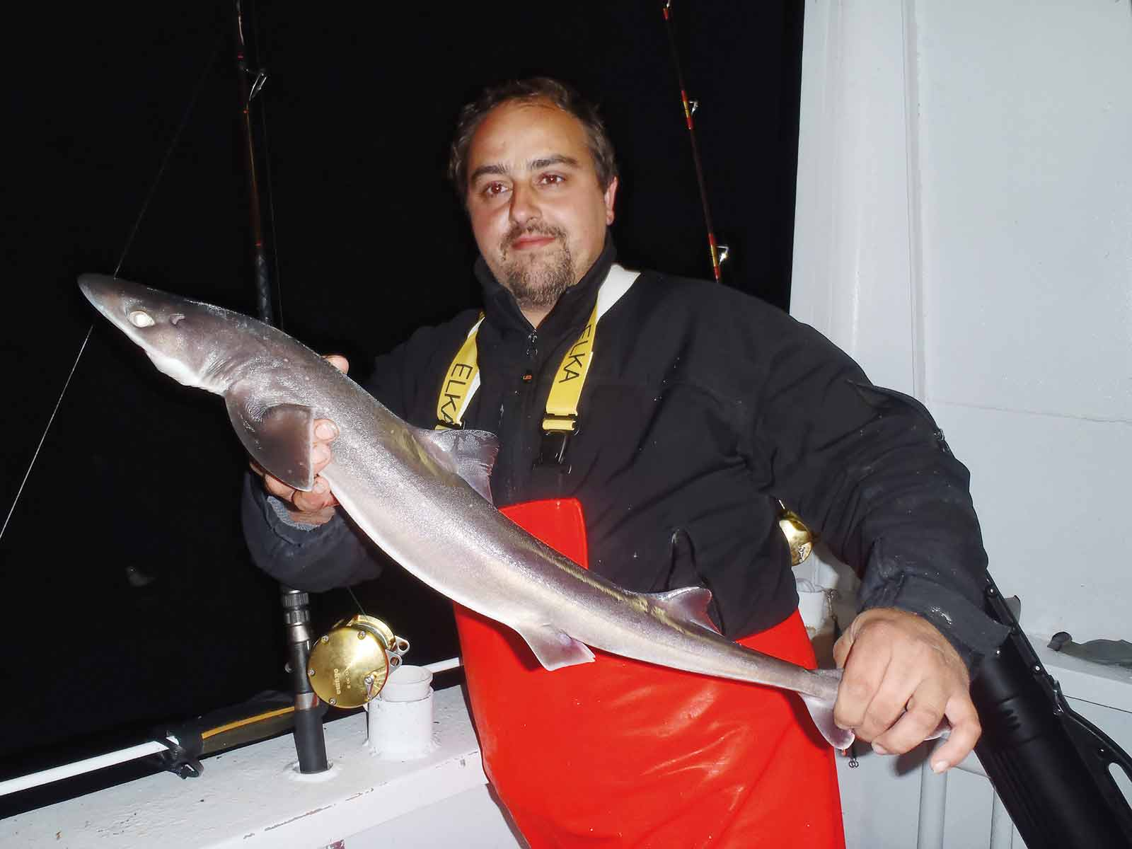 Stegt haj på den ufede måde