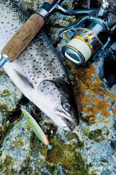 Falster byder på uanede muligheder for havørredfiskeren. Denne fisk snuppede en 24 grams Hugorm fisket på release-takel.