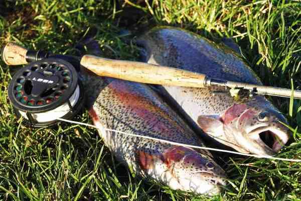 Det er vigtigt at holde orden på endegrejet. Både i flueæsken og æsken med det hårde isenkram. Disse regnbuer fulgte begge efter en lille nymfe fisket langsomt, dog uden at hugge. Et hurtigt skifte til en dognobler, inden fiskene nåede at forsvinde, var det der skulle til denne dag.