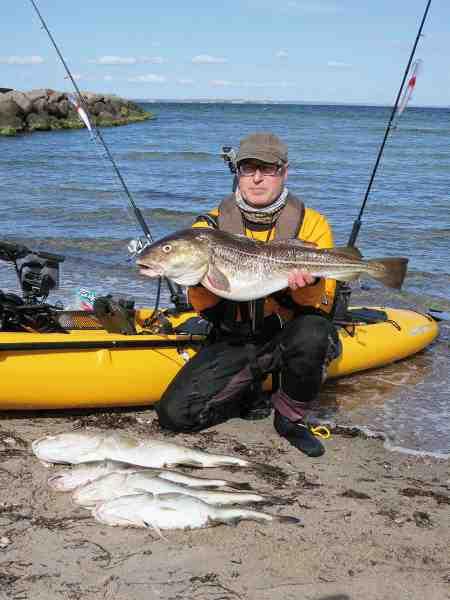 Forfatteren med en Øresundstorsk på 8,03 kilo, som formodentlig er den største torsk landet fra kajak i Danmark.