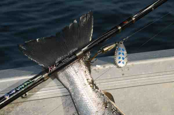 En lille let stang som fx denne 6 fods Gunki Kaze og en spinner, er en sjov samt effektiv kombination til fjordfiskeriet.