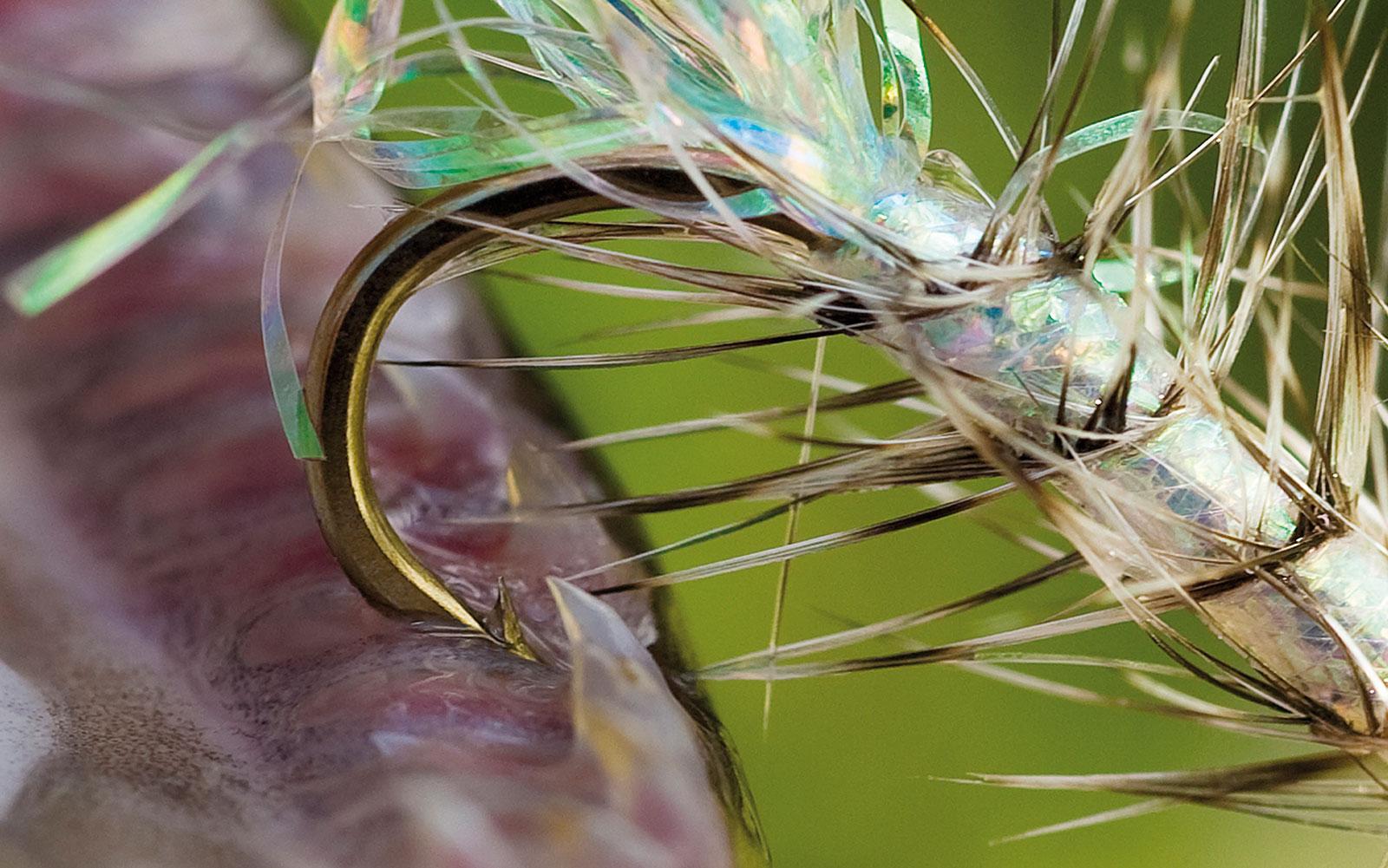 Derfor mister du mange fisk på kystfluen