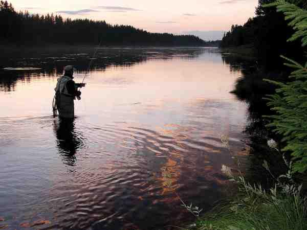 Terje Refsahl i fuld gang med aften fiskeriet efter ørred. Når dagen går på hæld trækker ørrederne fra midten af elven ind til kanterne, og det er på det tidspunkt, at det er nemmest at få kontakt med fiskene.