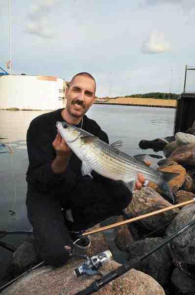 Martin Skjoldan har styr på det med multerne og har haft adskillige sæsoner med tocifrede fangster. Den dag Fisk & Fri var med ham i Kalundborg Havn fangede han intet mindre end fire multer på flåd og brød.