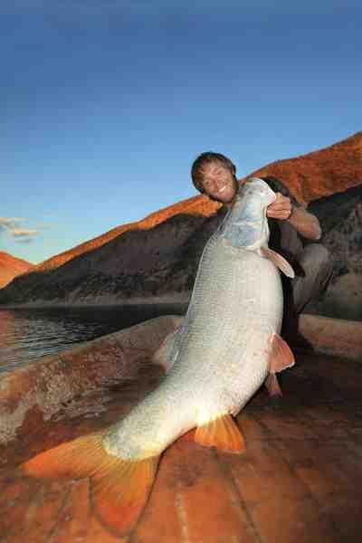Fisk & Fris Jakub Vagner er den første europæer, der har fanget en vild mangar barbe. Her har du ham med en gigant fisk på over 50 kilo taget på de øvre dele af Eufrat i et af verdens farligste krigzoner – Syrien.