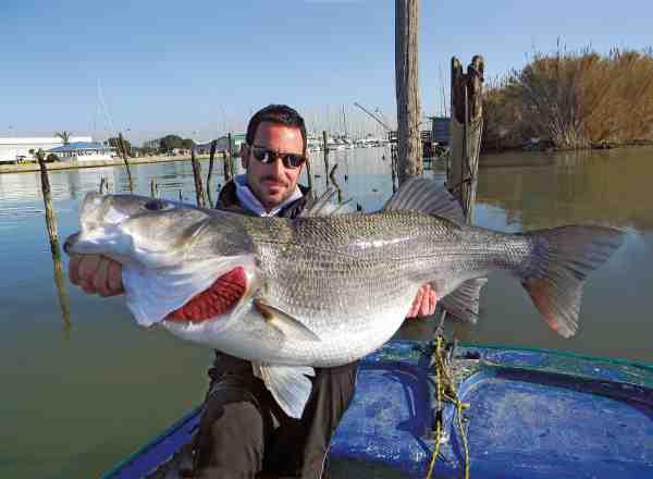 Italien byder ikke blot på megagedder, men også gigantiske havbars. Her er det Roberto Prenassi med en 12 kilos fisk taget i lagunen ved Tevere.