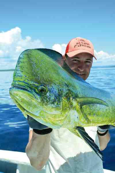 En guldmakrel er en suveræn sportsfisk; en alsidig fighter, som både kan springe vildt, tage lange udløb og gå dybt og stædigt.